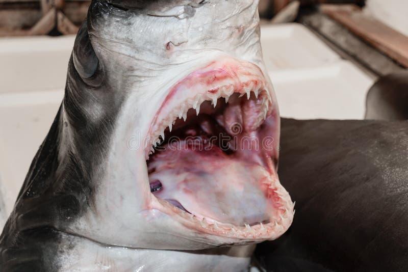 Shark head in fish market stock photography