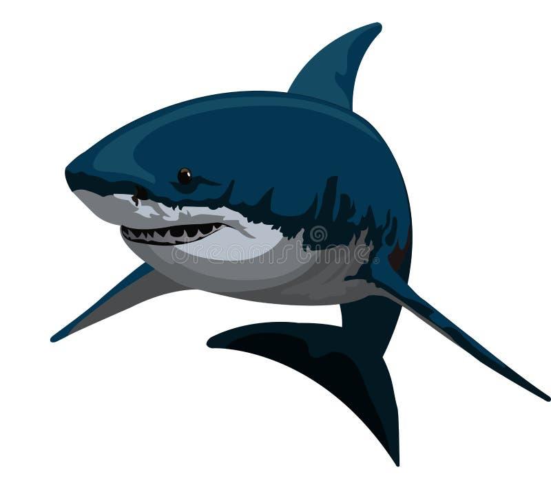 Download Shark, illustration stock vector. Image of carnivore - 25968242