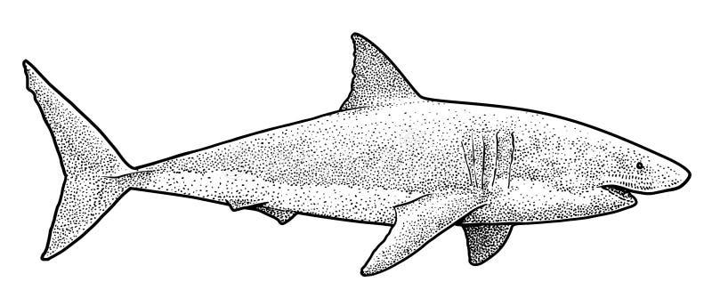 Great white shark illustration, drawing, engraving, ink, line art, vector stock illustration