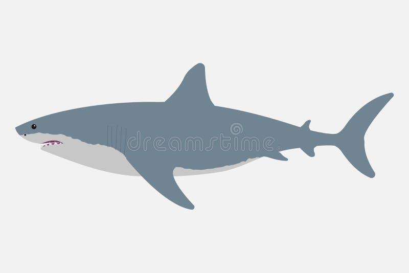 Shark isolated on white background. Vector illustration vector illustration
