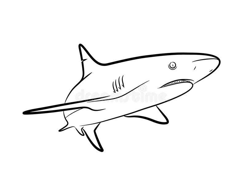 Line Art Shark : Shark line art stock vector image of great grey fish