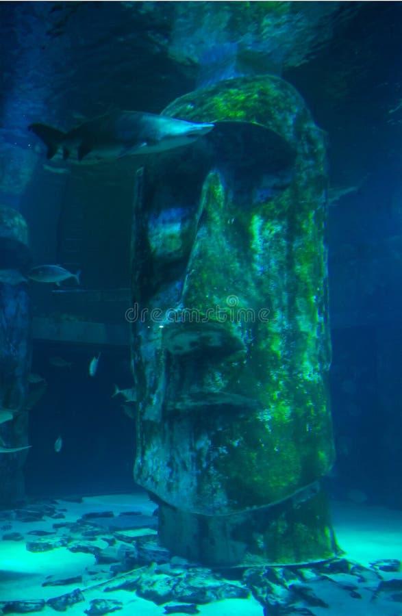 Shark at The London Aquarium stock images