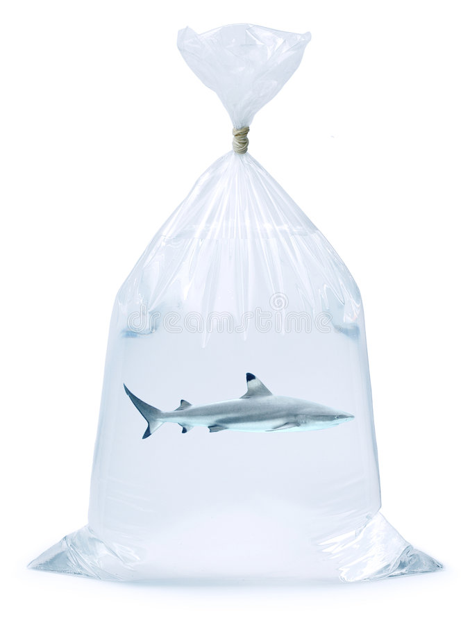 Shark Plastic Bag. Shark in a pet shop plastic bag isolated on a white background