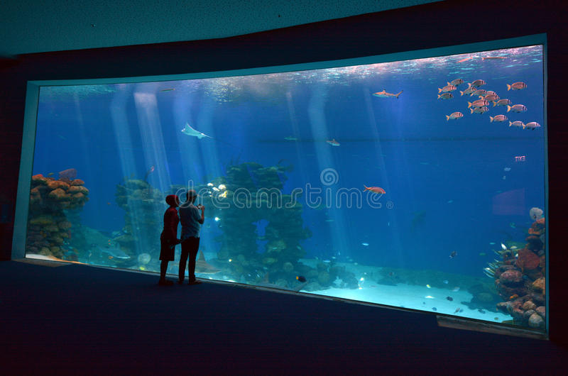 Shark Pool of Coral World Underwater Observatory aquarium in Eilat, Israel. royalty free stock photography