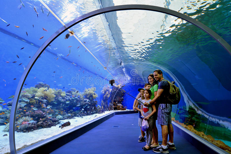 Shark Pool of Coral World Underwater Observatory aquarium in Eilat, Israel. stock images