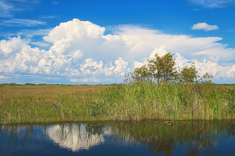 Shark River Slough. View of the Shark River Slough adjacent to the Tamiami Trail with typical summer clouds. A slough is slow moving body of water. The Shark stock photography