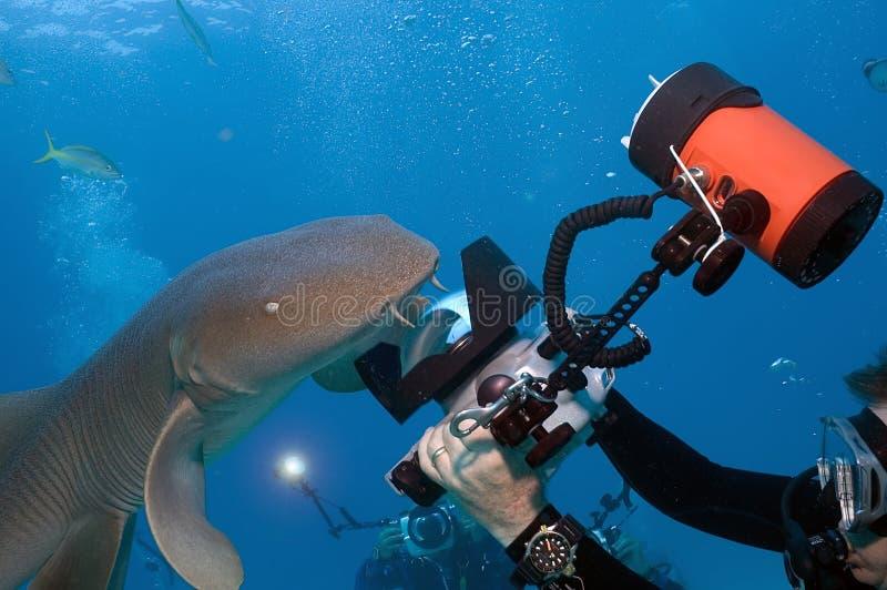 Shark Shootout stock photography