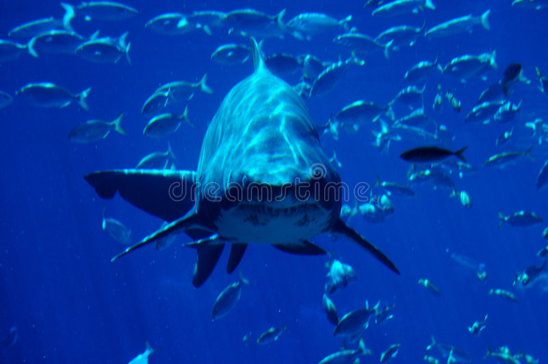 Shark spotting #2. Shark. Ushaka. Durban, South Africa stock photography