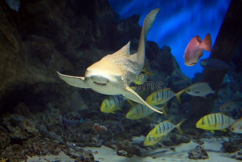 Shark swimming along underwater stock photos