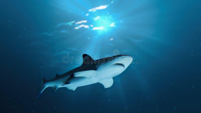 Shark is swimming underwater in ocean. royalty free stock images