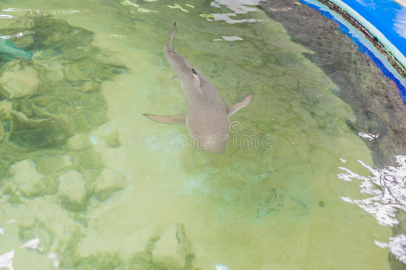 The shark swims in the aquarium. View from above stock images