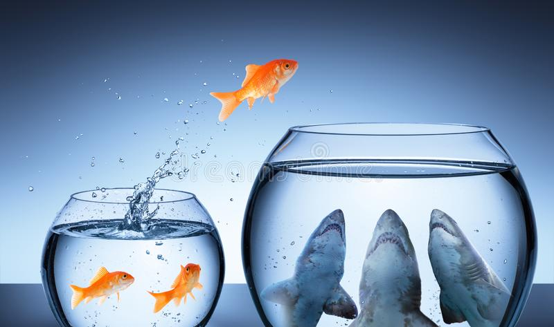 Shark Trap - Business Risk Concept. Goldfish Jumping In Shark Tank stock photo