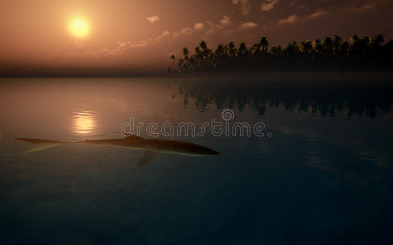 Shark On Tropical Water stock image