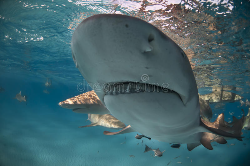 Shark visit royalty free stock photography