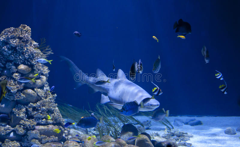Download Shark in the water stock photo. Image of school, tropical - 20977304