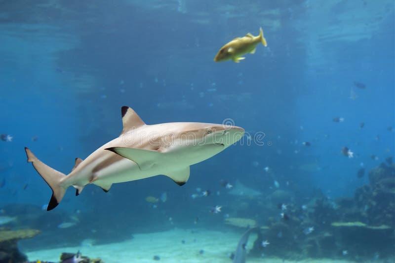 shark2 стоковые изображения