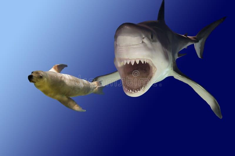 sharkattack стоковое изображение rf