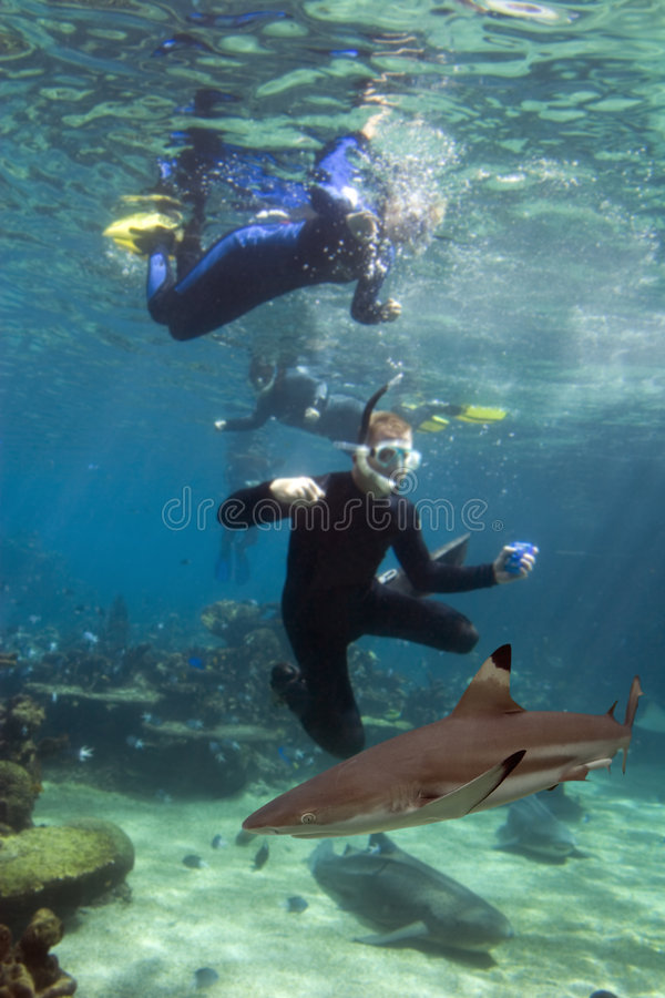 Sharkdivers stockbilder