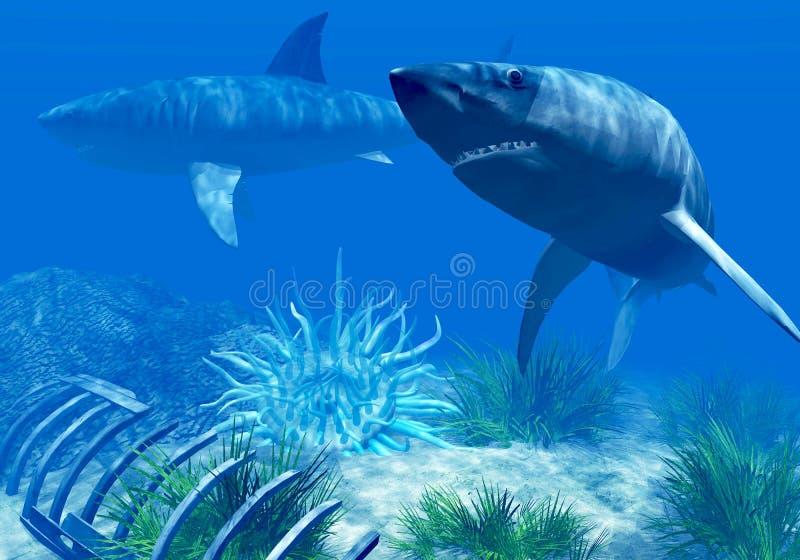 Download Sharks stock illustration. Image of silhouette, dangerous - 8142600