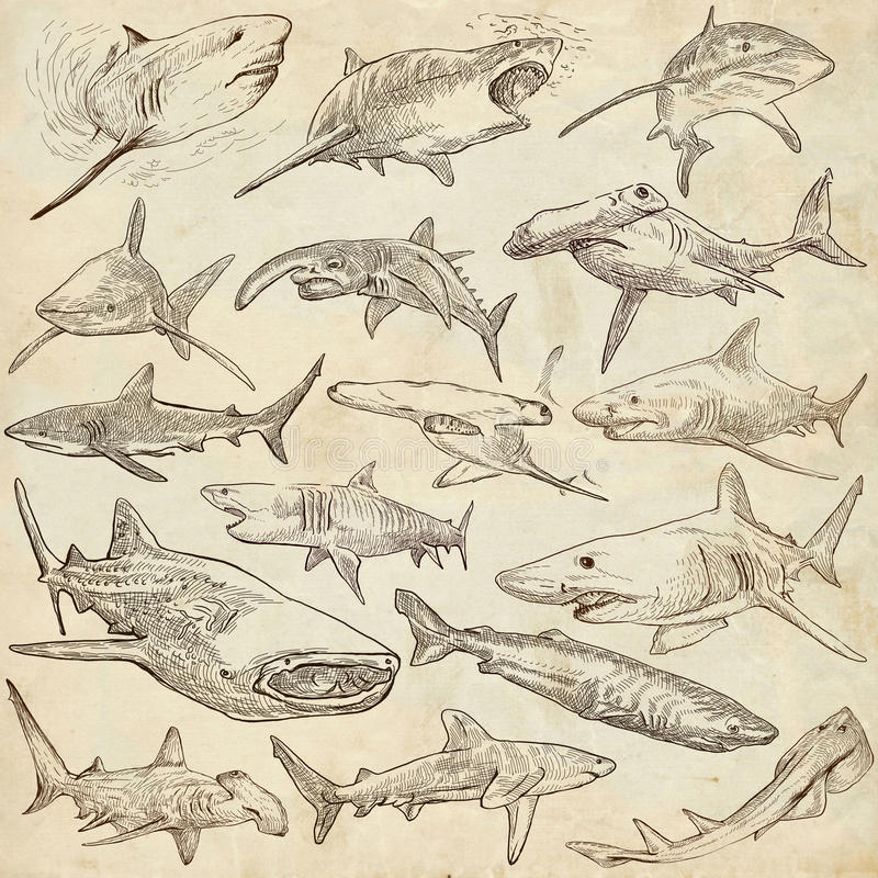 Free Sharks - An Hand Drawn Pack. Freehand Sketching, Originals. Royalty Free Stock Images - 69170429
