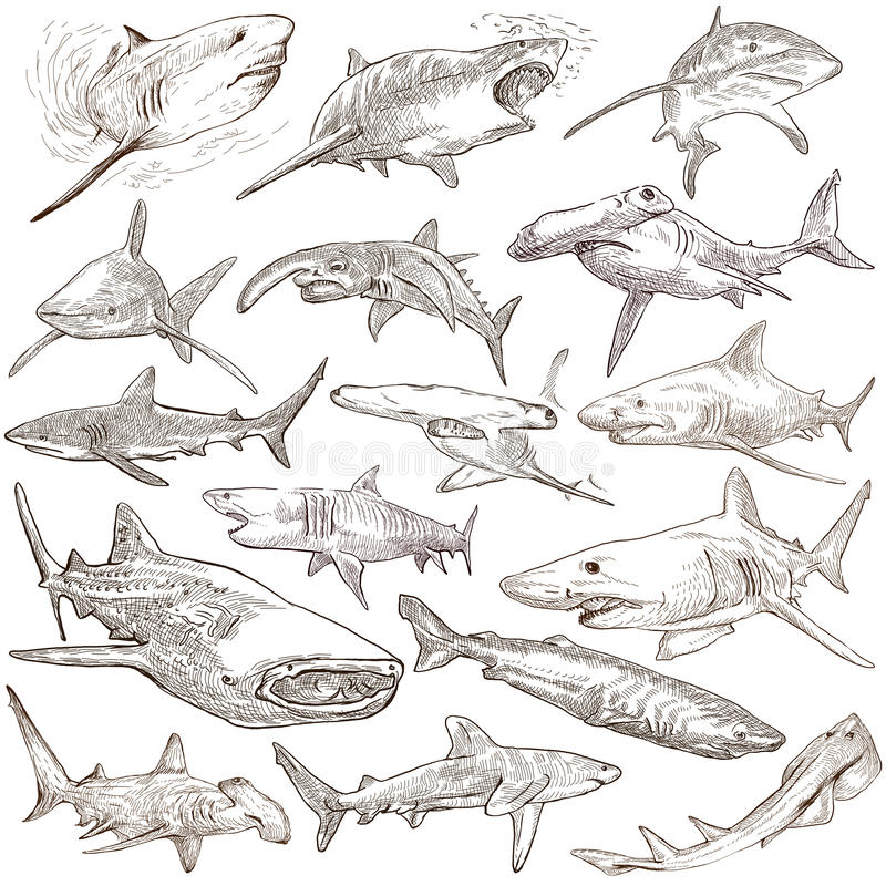 Free Sharks - An Hand Drawn Pack. Freehand Sketching, Originals. Royalty Free Stock Photos - 69170458