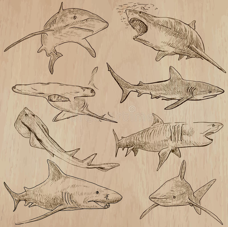 Free Sharks - An Hand Drawn Vector Pack Stock Photos - 69170413