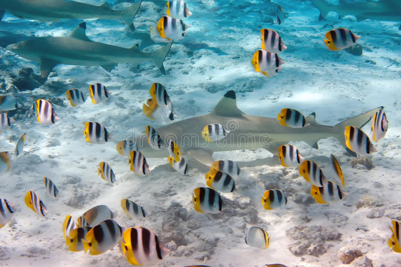 Sharks and bright small fishes stock photo