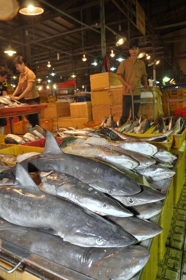 Sharks are waiting for purchasing at the Binh Dien wholesale night seafood market, the biggest one in Ho Chi Minh city, Vietnam. HO CHI MINH CITY, VIETNAM stock photography