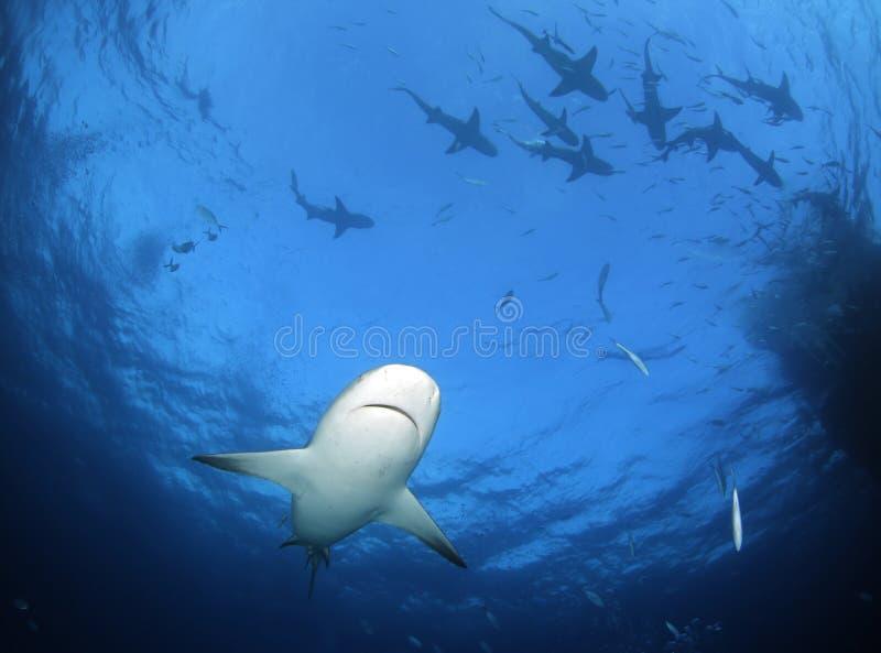 Sharkwater image stock