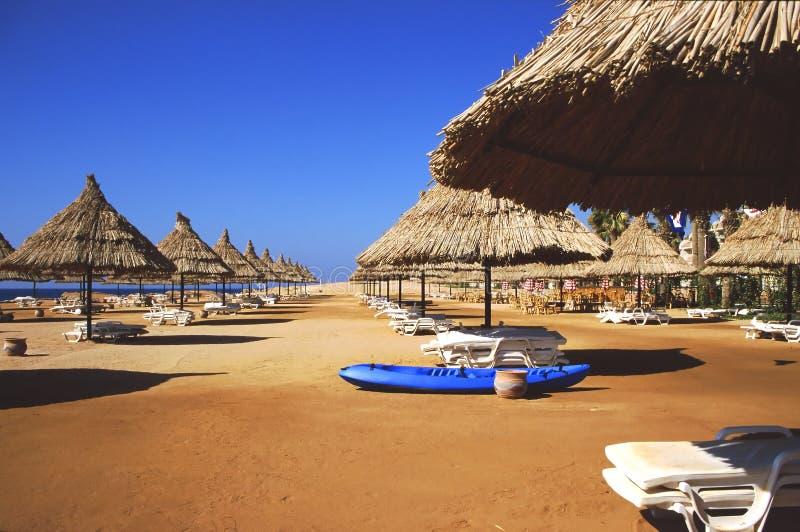 Sharm beach. Exotic Sharm El Sheik beach royalty free stock photography