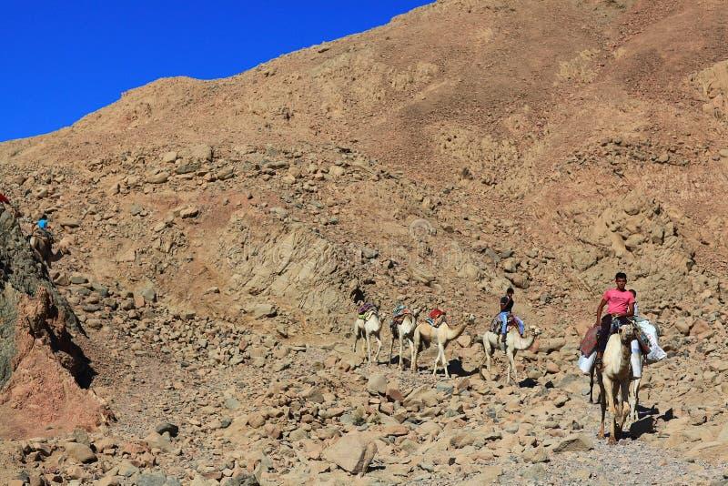 """Sharm El谢赫,埃及†""""6月15日:骆驼自动扶梯有蓬卡车在西奈2015年6月15日的蓝色霍尔山的  免版税图库摄影"""