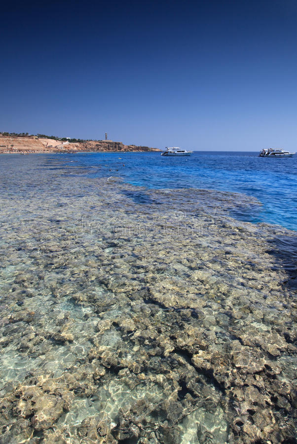 Sharm el Sheikh coast. Beautiful coral reef in Sharm el Sheikh, Egypt stock images