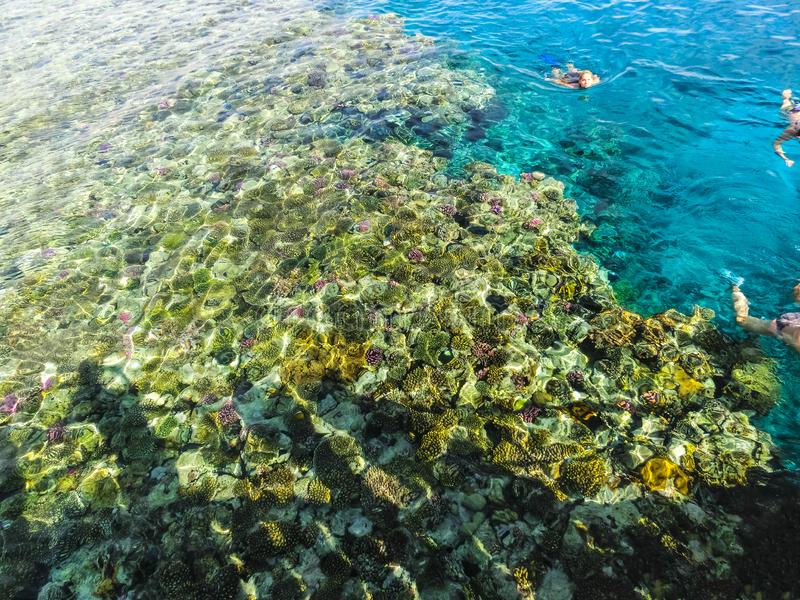 Sharm el Sheikh, Egito - 31 de dezembro de 2018: Os povos que mergulham em águas azuis acima do recife de corais no Mar Vermelho  foto de stock