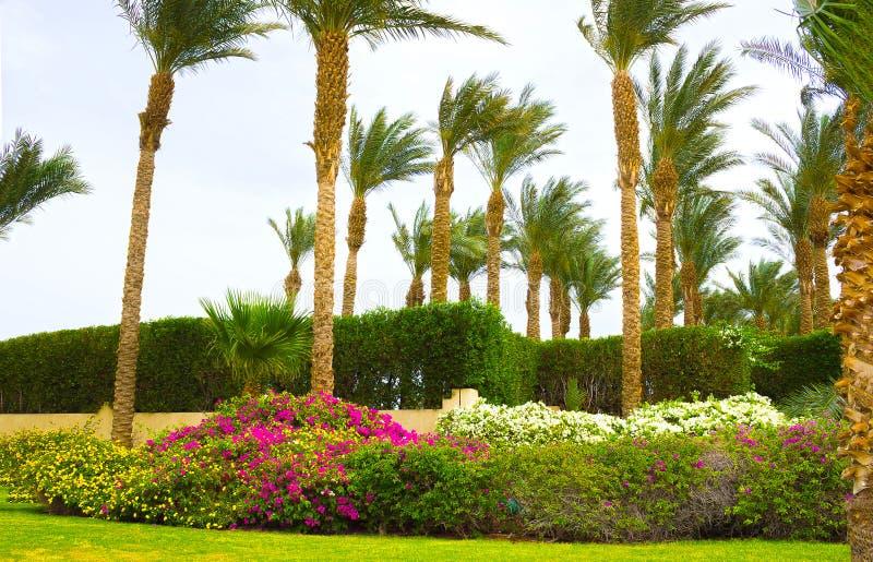 Sharm el-Sheikh, Egitto - 11 aprile 2017: L'area del parco all'hotel una località di soggiorno Sharm el-Sheikh di quattro stagion fotografia stock libera da diritti