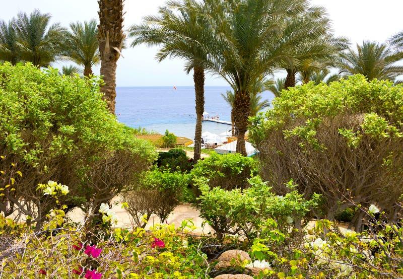 Sharm El-Sheikh, Egitto - 11 Aprile 2017: La Spiaggia E L\'hotel Di ...