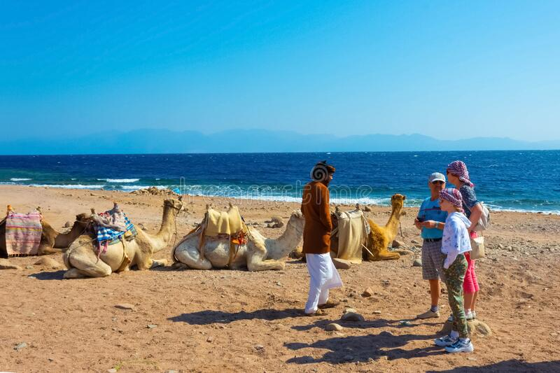 Sharm El Sheikh, Egypt - February 17, 2020: The local man and camels on beach with help of Egyptian man. Sharm El Sheikh, Egypt - February 17, 2020: The local royalty free stock images