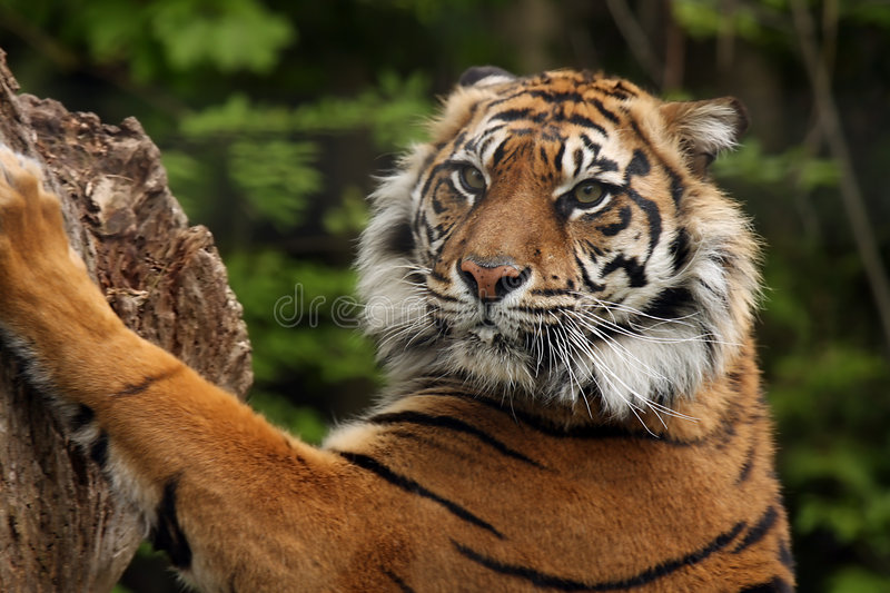 Sharp Claws royalty free stock photography