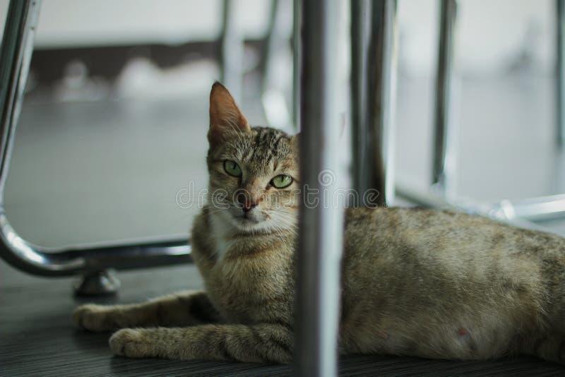 Sharp-eyed cat royalty free stock photography