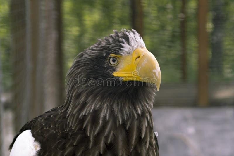 Sharp look, powerful beak