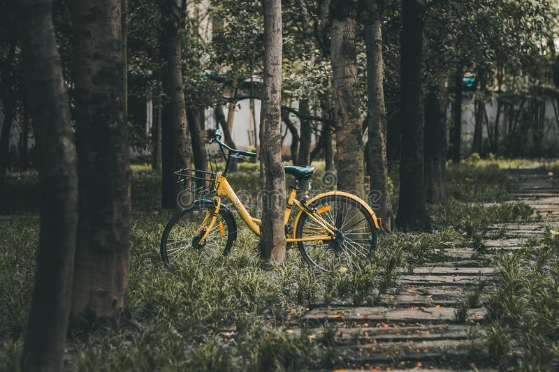Image of yellow bike in forest stock photography