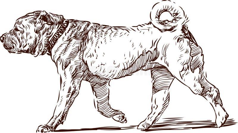 Download Sharpei stock vector. Image of walking, profile, animal - 26995479