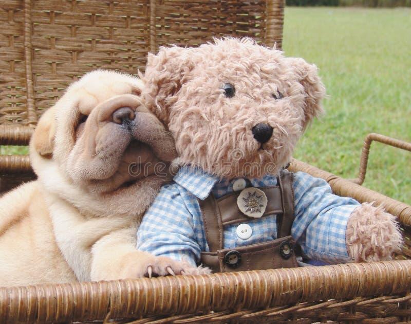 Sharpei en teddy stock fotografie