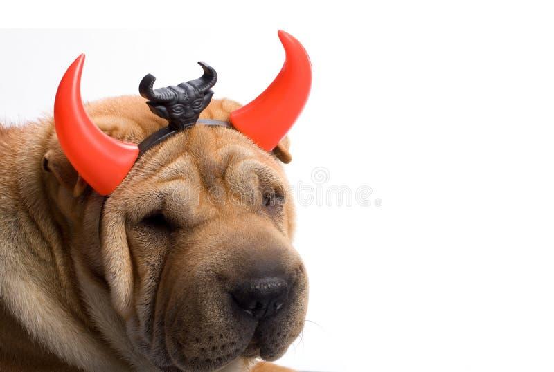 Sharpei Hund lizenzfreie stockfotos