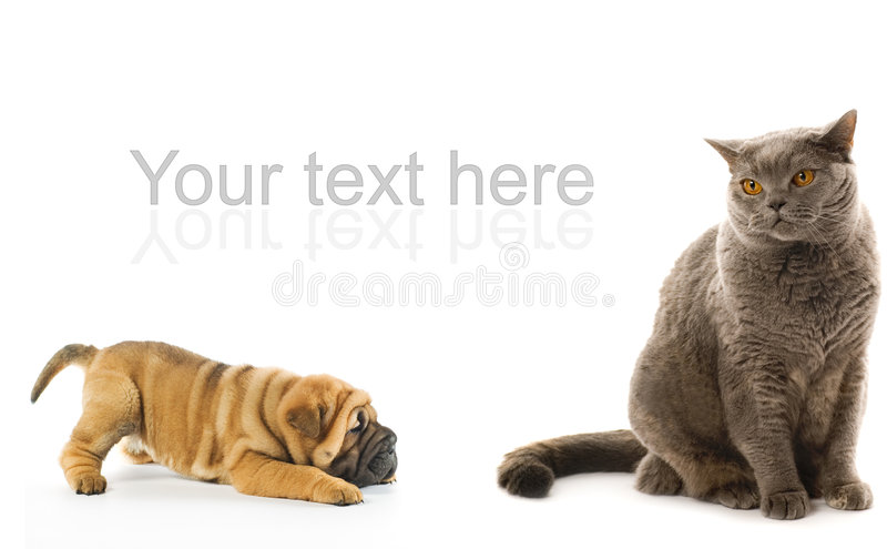 Sharpei puppy and british cat stock images