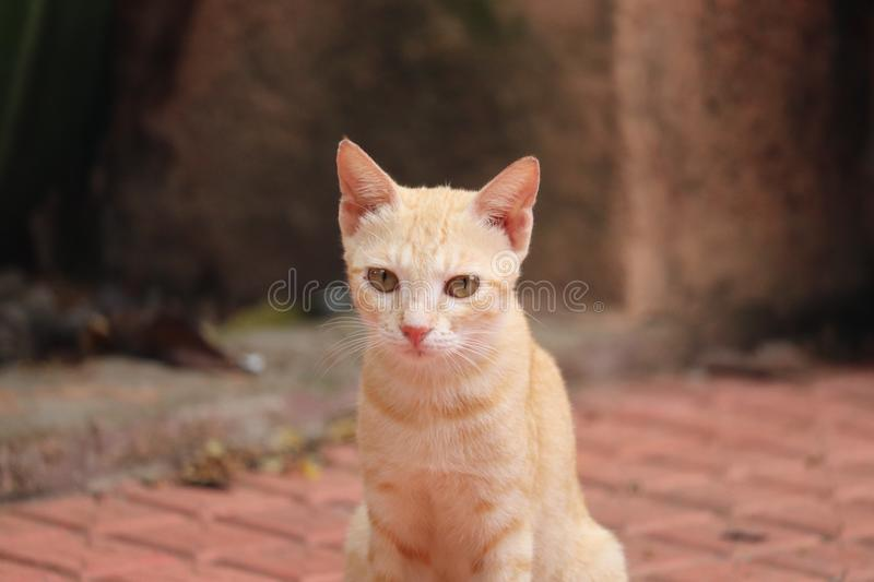Cats. Sharpened ears and eyes stock images