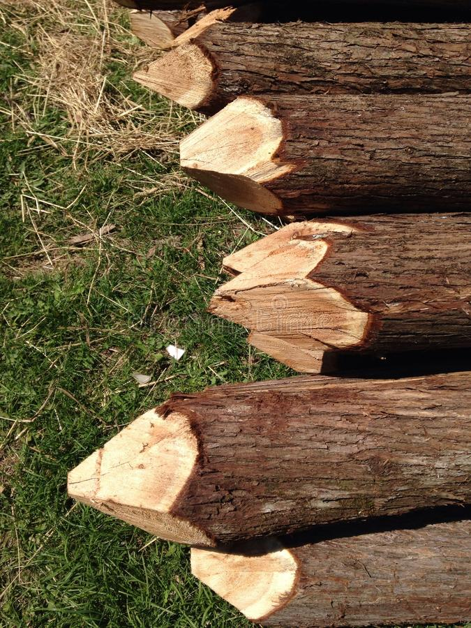 Sharpened fence posts royalty free stock photography