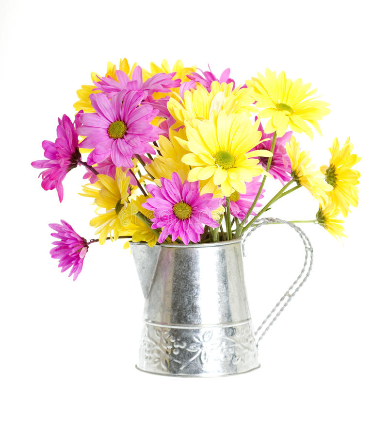 Download Shasta Daisy Flowers In Water Can Stock Photo - Image: 14269124