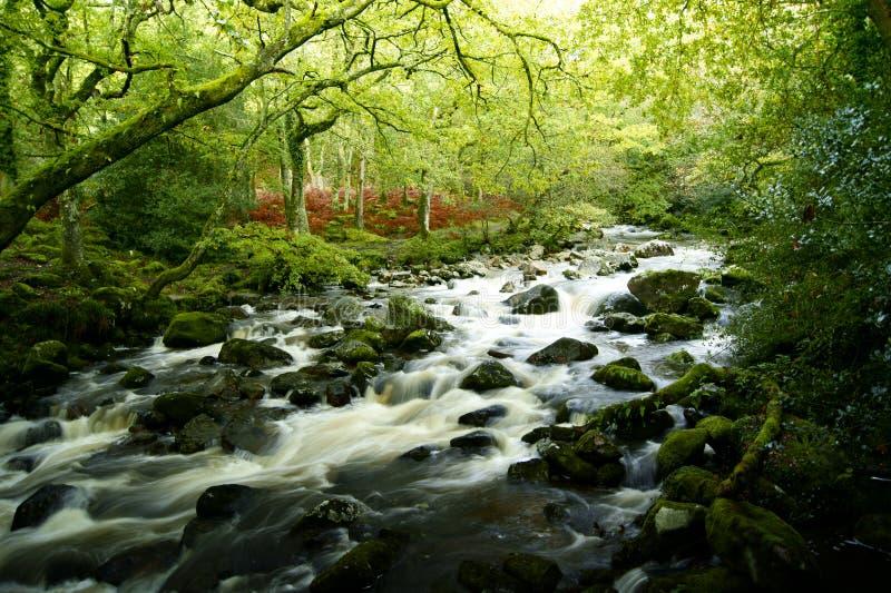 Shaugh previamente, parque nacional Devon do dartmoor foto de stock royalty free