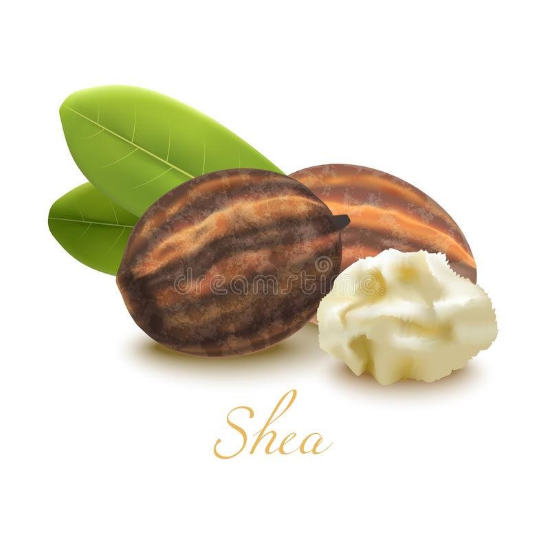 Shea Butter Nuts and Leaves in Realistic Style vector illustration