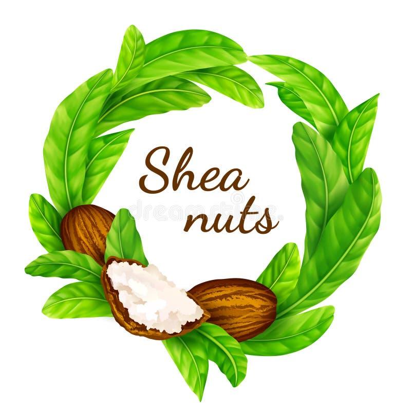 Shea-Nüsse mit Blättern im Vektor lizenzfreie stockfotos